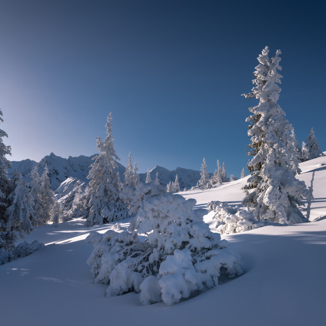 """Winter view from Tatra mountain. Snow covered trees"" stock image"