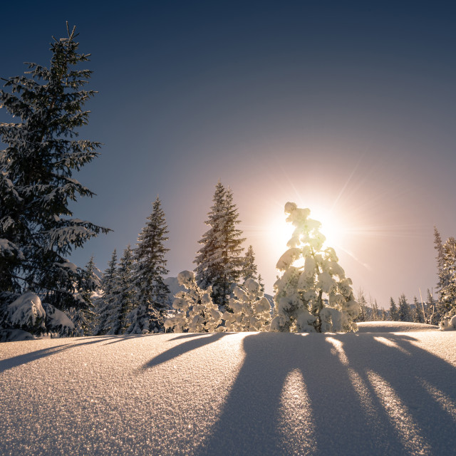 """Sunset at snow covered trees in the Tatra mountain"" stock image"