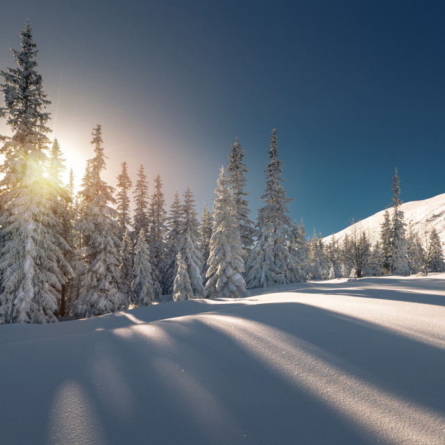 """Snow covered trees in Tatra mountain National Park"" stock image"