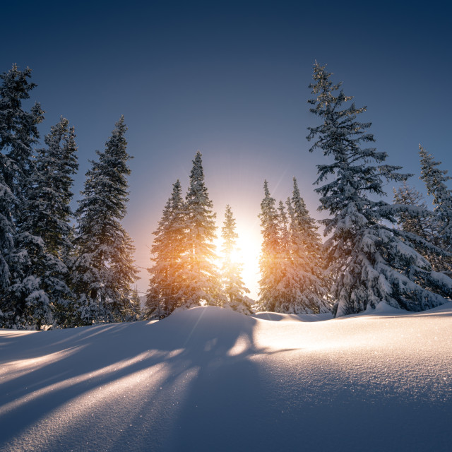 """Sun rays from behind the snow covered trees Tatra Mountain"" stock image"