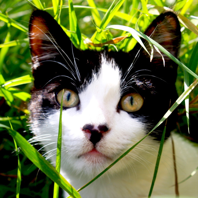 """""""The cat in the grass"""" stock image"""