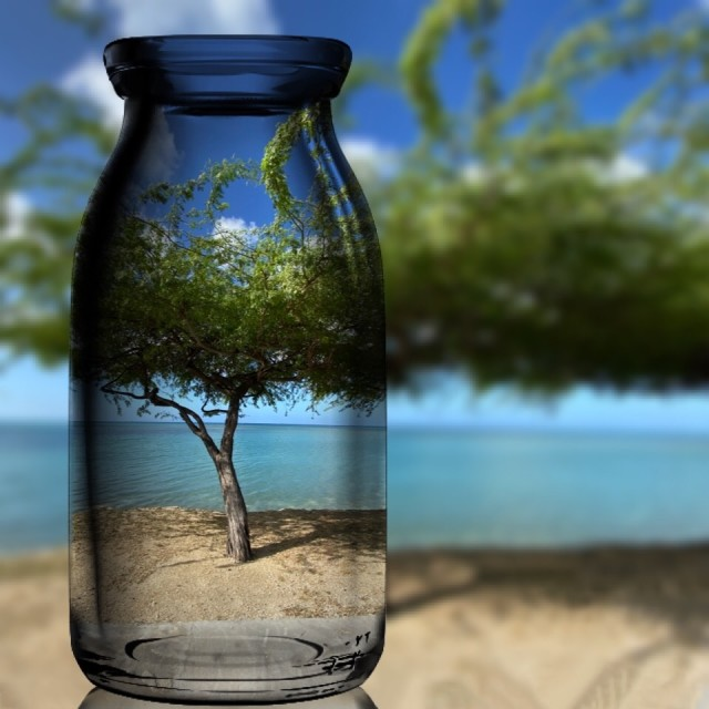 """Divi Divi Tree on the Beach"" stock image"