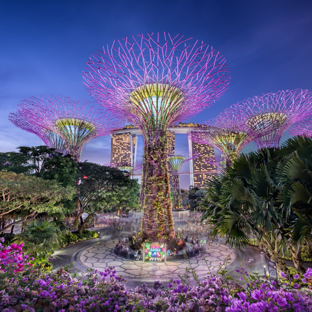 """""""Gardens by the bay in Singapore"""" stock image"""