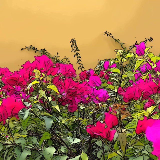 """Bright pink flowers against yellow wall"" stock image"