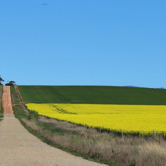 """Country canola"" stock image"