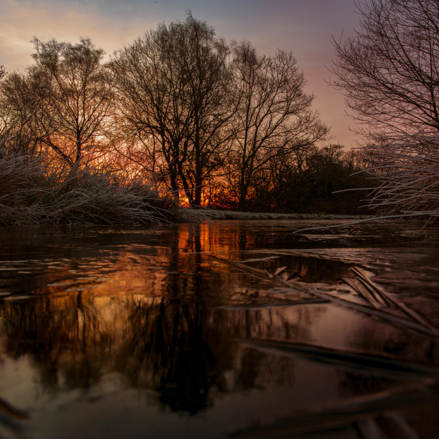 """Dawn over the duck pond"" stock image"