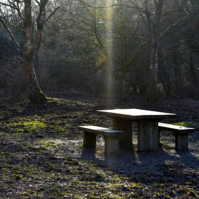 """""""A Picnic Table in Forest of Dean"""" stock image"""