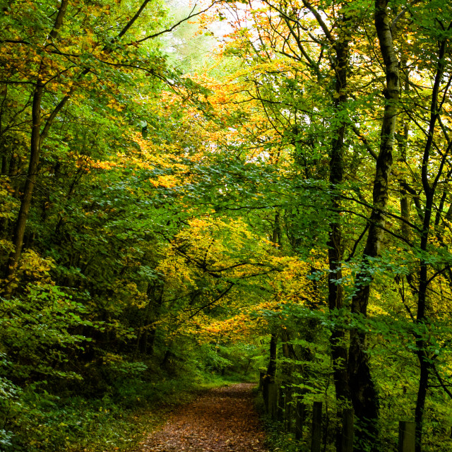 """""""An Early Autumn Walk in the Forest of Dean"""" stock image"""