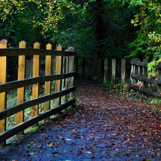 """Early Autumn on the Bridge"" stock image"