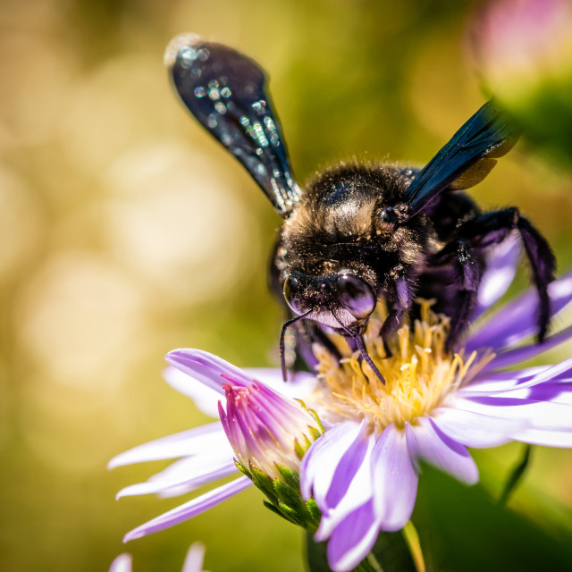 """""""An insect sucking nectar"""" stock image"""