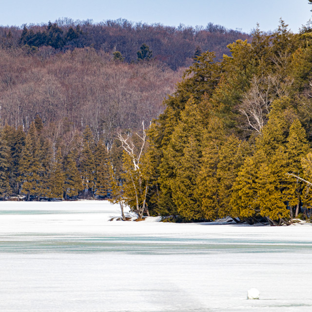 """""""Frozen Forested Lake in Winter"""" stock image"""