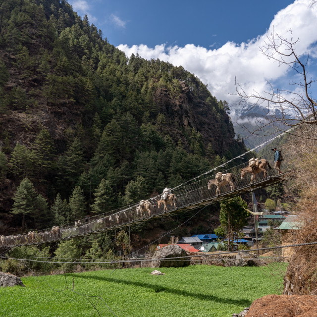 """Suspended Bridge in the Himalayas"" stock image"