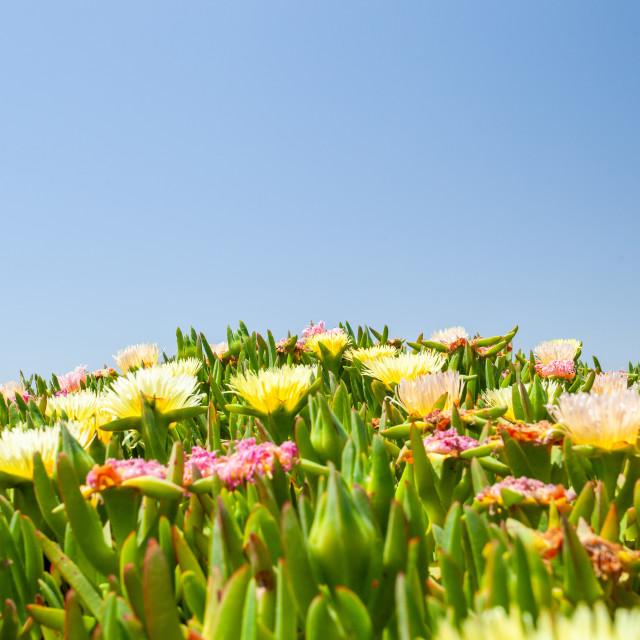 """""""Californian Coastal Flora"""" stock image"""