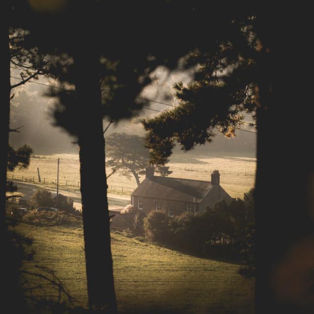 """""""Farmhouse through the Trees"""" stock image"""