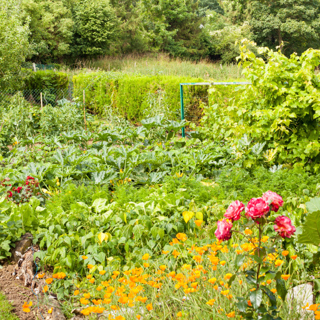 """pretty little flower garden in the countryside filled with varied vegetables..."" stock image"