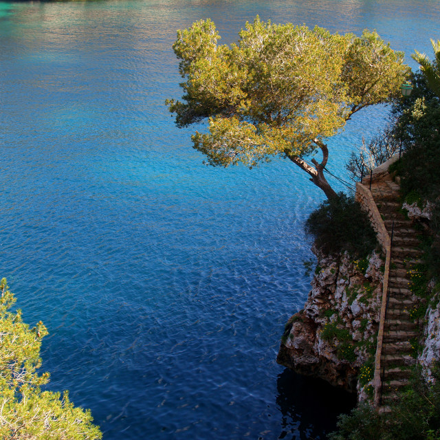 """""""Tree and Steps, Cala Figuera"""" stock image"""