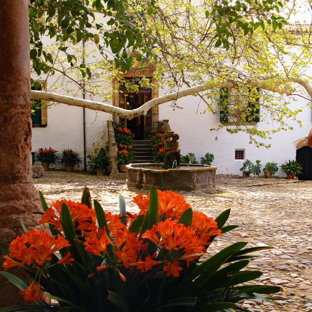 """""""Alfabia Courtyard and Flower"""" stock image"""