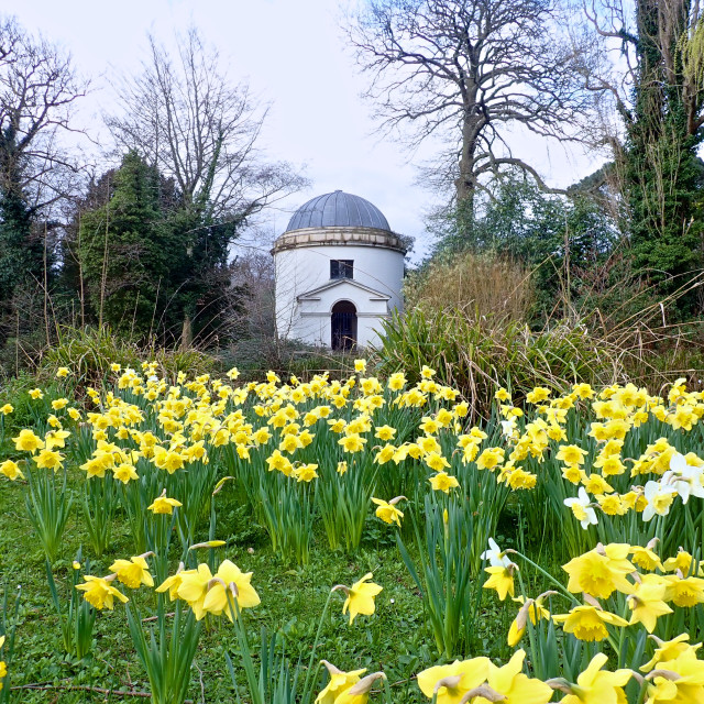 """temple and daffodils"" stock image"