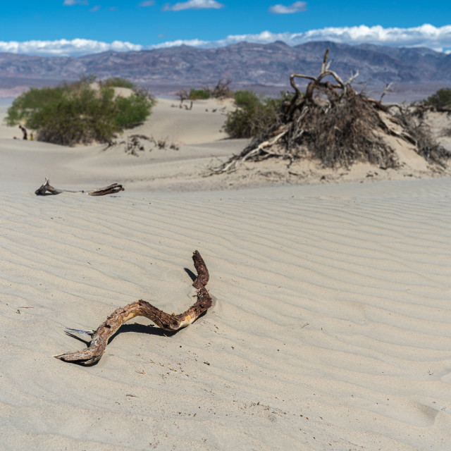 """Death Valley"" stock image"