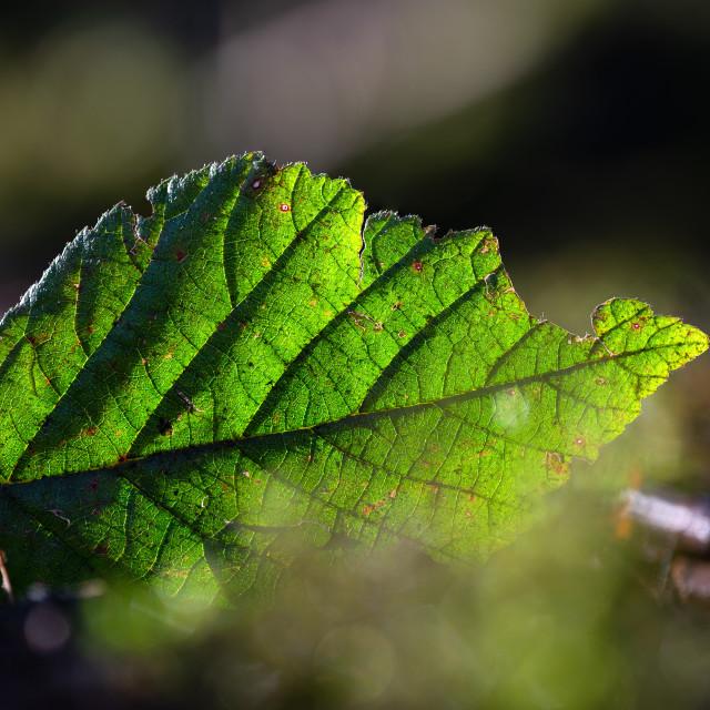 """Leaf Macro"" stock image"