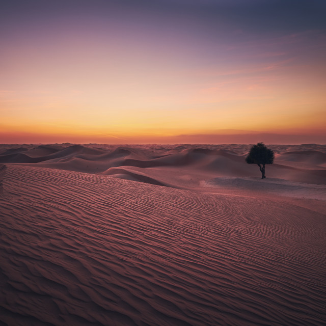 """Desert landscape at dusk"" stock image"