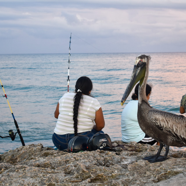 """""""Pelicans and fishing at Tulum beach"""" stock image"""