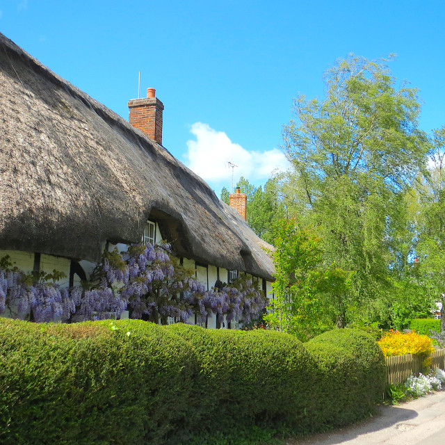 """Wisteria thatched cottage"" stock image"