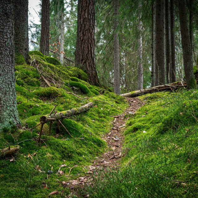 """""""A walk in the forest"""" stock image"""