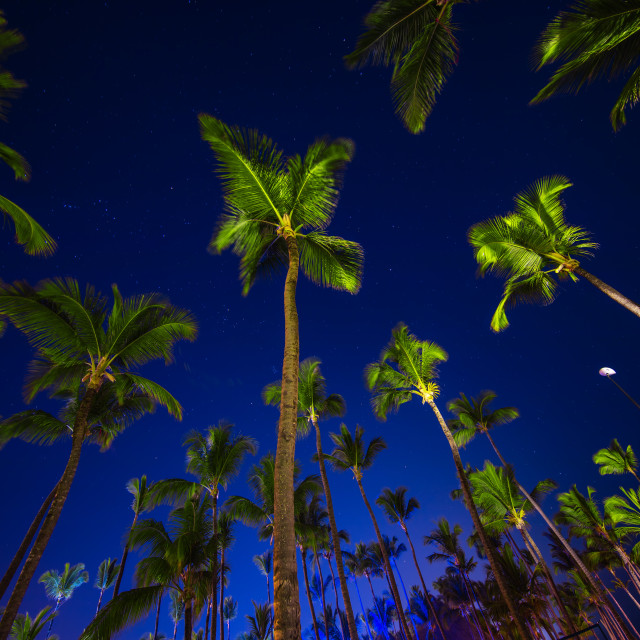 """Coconut palm trees perspective view at night"" stock image"