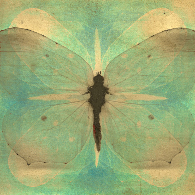 """""""Vintage butterfly"""" stock image"""