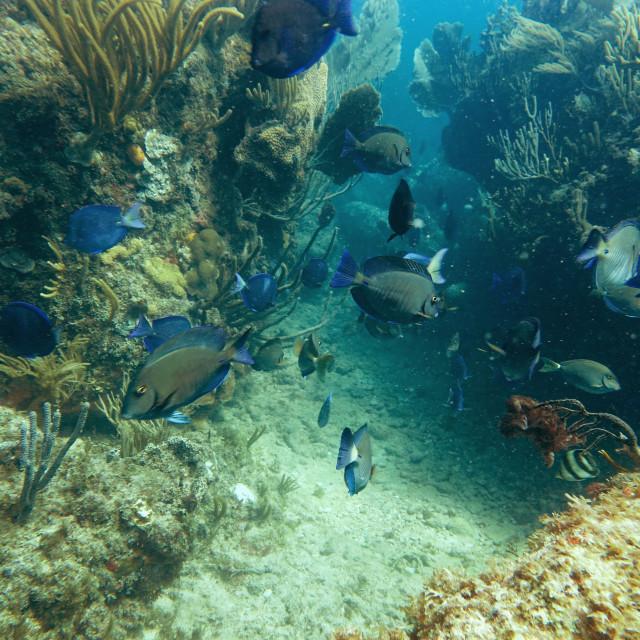 """""""Fish Frenzy"""" stock image"""
