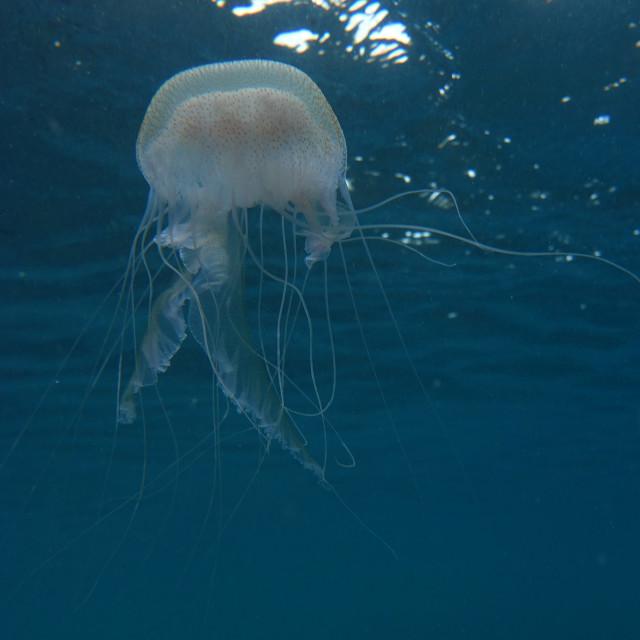 """""""Floating Jellyfish"""" stock image"""
