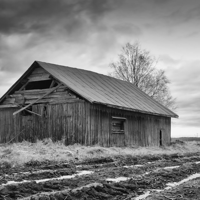 """""""Abandoned Barn House By The Spring Fields"""" stock image"""