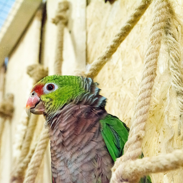 """Beautiful parrot in ""Papugarnia"" (Krakow, Poland)"" stock image"