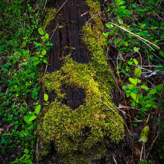 """Green moss on log"" stock image"