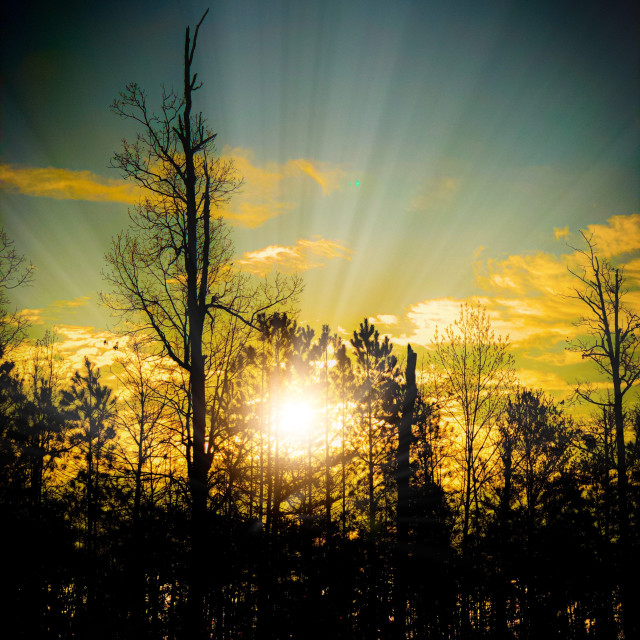 """Sunset with trees"" stock image"