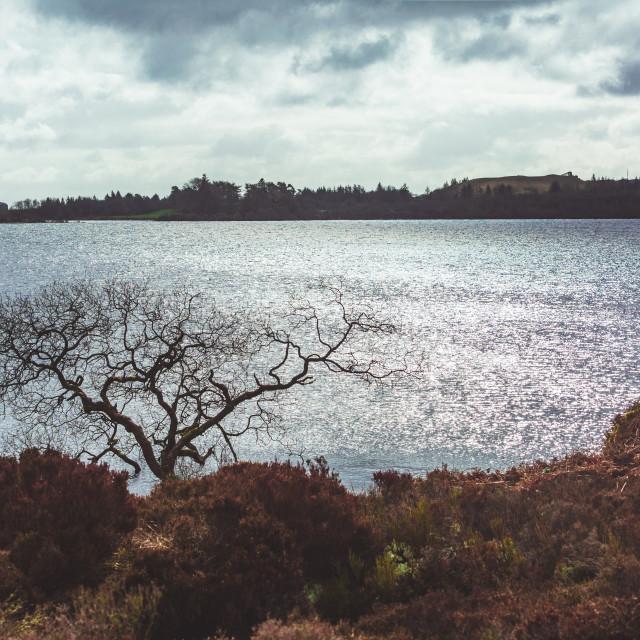 """""""Lough Fea"""" stock image"""