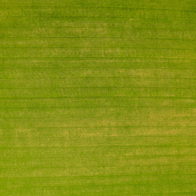 """""""Green field texture from above"""" stock image"""