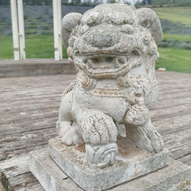 """Lion in Kula"" stock image"