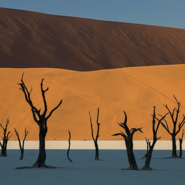 """""""Dead Camelthorn Trees in Deadvlei Salt Pan"""" stock image"""