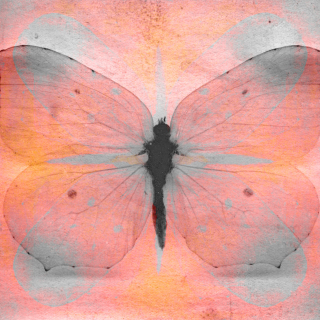 """""""Vintage pink and yellow butterfly"""" stock image"""