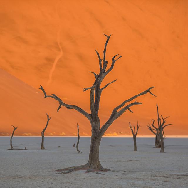 """Deadvlei Salt Pan, Namibia"" stock image"