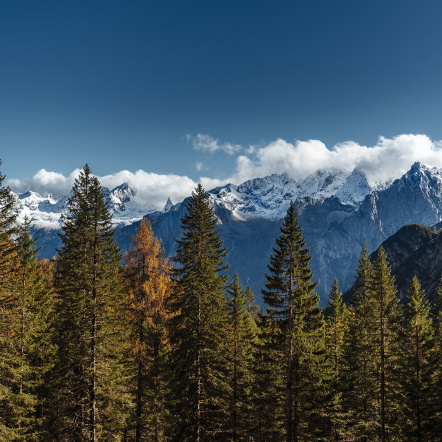 """""""Colourful forest and Dolomite mountains surrounded by clouds in South Tyrol,..."""" stock image"""