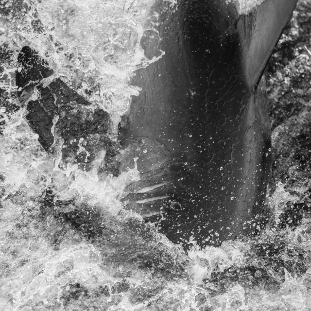 """""""Great White Shark Abstract"""" stock image"""