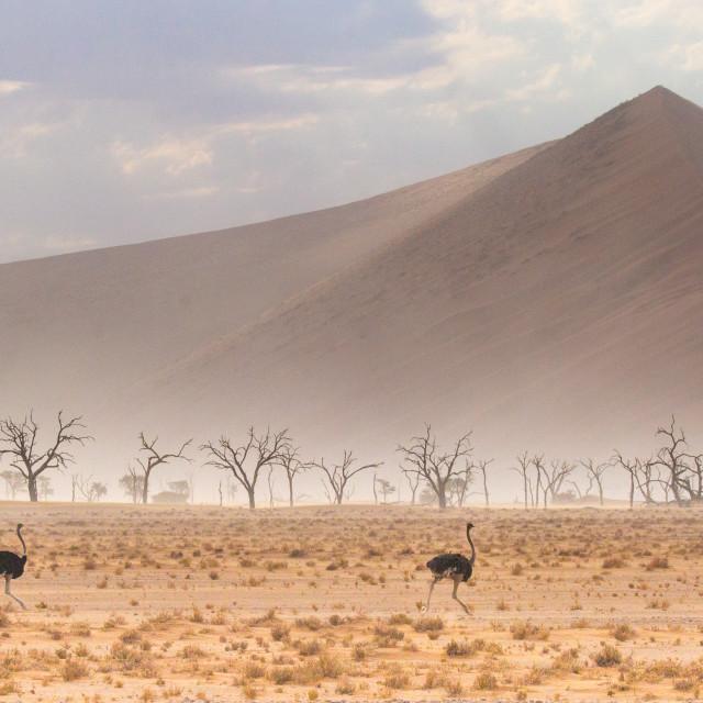 """Sand Storm in Sossusvlei"" stock image"