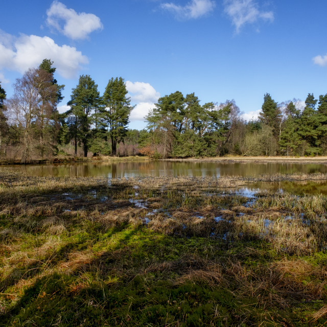 """Keir dam in Devilla forest"" stock image"