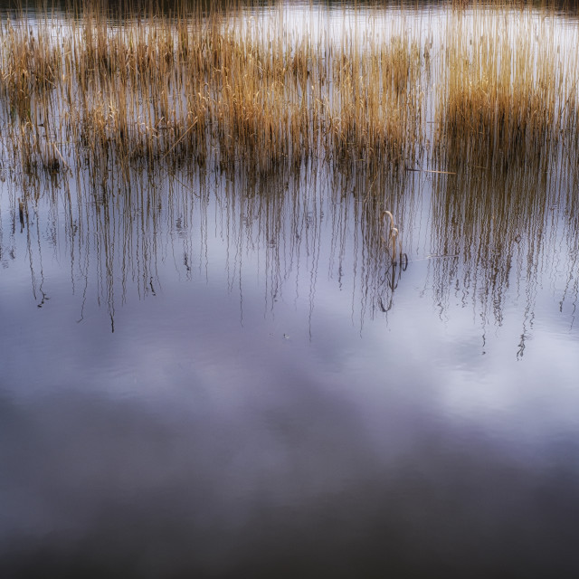 """Reflections on Moor Loch"" stock image"