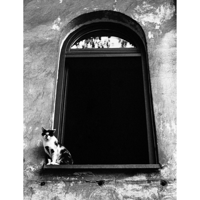 """Backyard cat"" stock image"