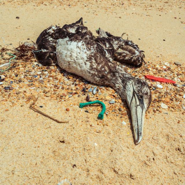 """Dead seagull on beach 3"" stock image"