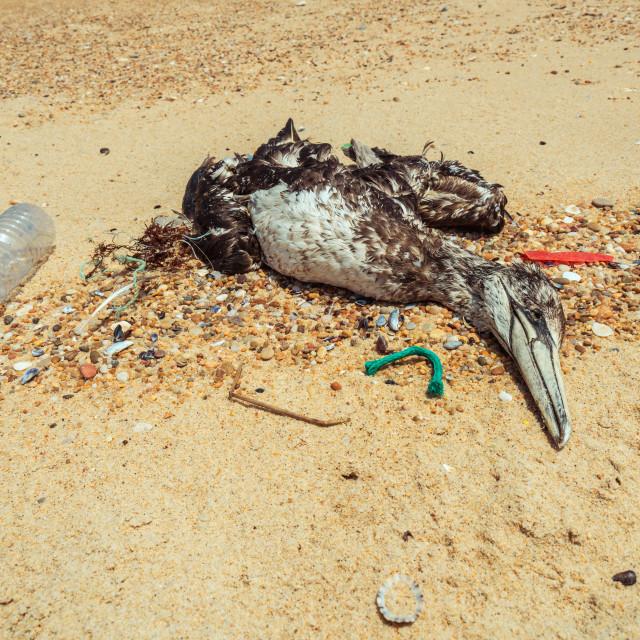 """Dead seagull on beach 4"" stock image"